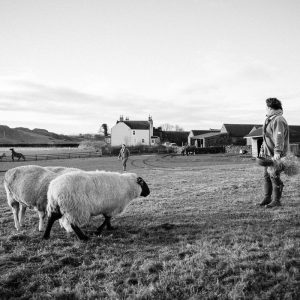 Family feeding pet sheep in Duns Scottish Borders family photography session